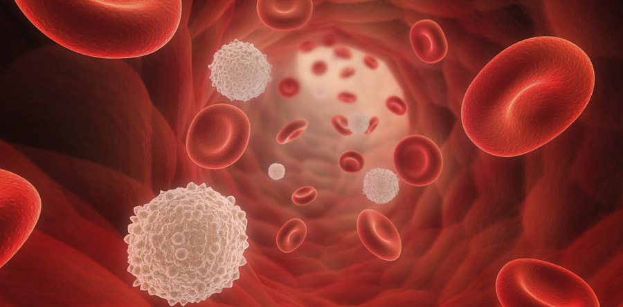 Blood, Marrow, And an Introduction to Leukaemia